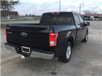 2016 F-150 SuperCrew Cab 4x2,  Pickup #E28429 - photo 1